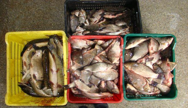 Foto: Polițiștii de frontieră tulceni au confiscat peste 570 kg de pește