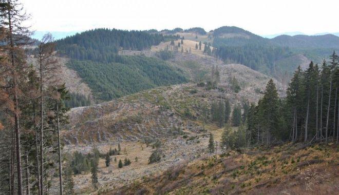 Comisia Europeană avertizează România în privința exploatărilor ilegale de lemn - 1-1593706940.jpg