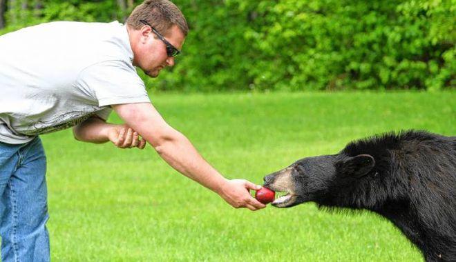 Ministrul Mediului: Toți cei care hrănesc ursul la marginea drumului trebuie să primească amendă - 1-1594052363.jpg