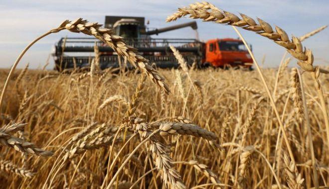 Adrian Oros: Grâul de panificație va fi suficient, în pofida producției diminuate de cereale în acest an - 1-1598028402.jpg