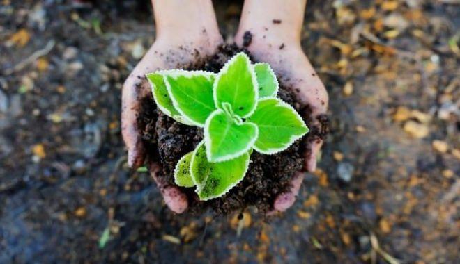 Secretarul general al ONU: Echilibrul ecologic al planetei este distrus - 1-1606930115.jpg