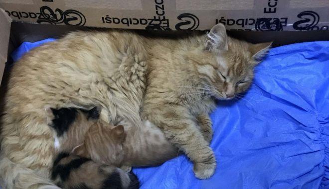Daily Sabah: O pisică și-a dus puii bolnavi la un cabinet medical pentru oameni în Turcia - 103470-1617430888.jpg