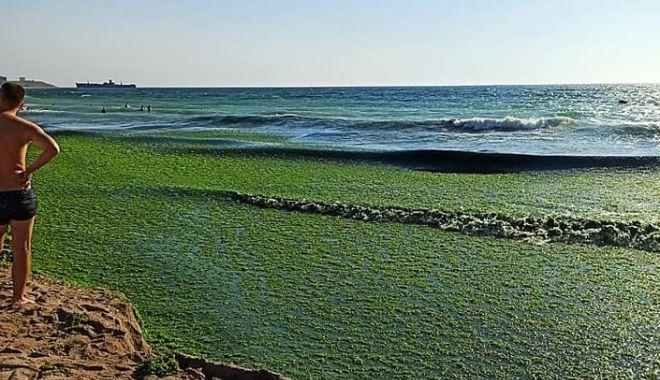 Foto: Zeci de tone de alge au fost strânse de pe plajele de la Costinești