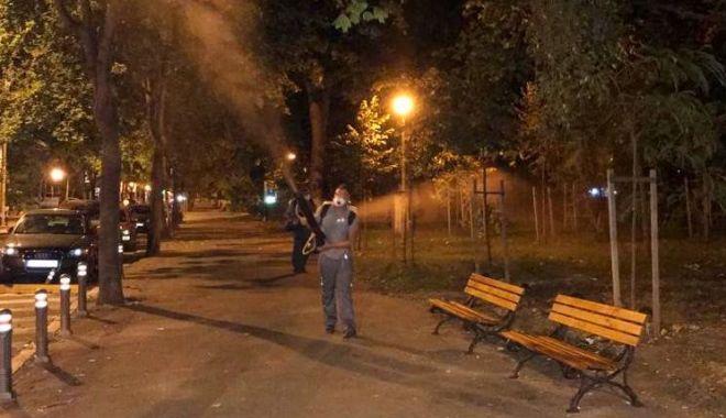 Foto: Se desfășoară acțiuni intensificate de dezinsecție în toate cartierele orașului