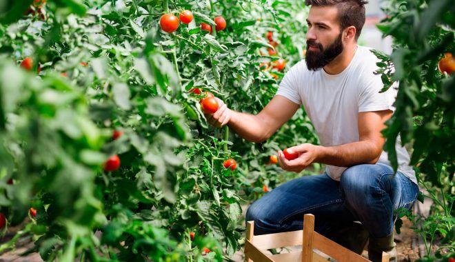 România nu se află printre ţările care vor atinge 25% în agricultura BIO - 1582295289ceinseamnaagriculturab-1627213491.jpg