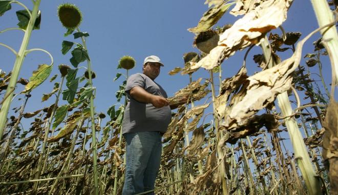 Nota pentru seceta din 2012: 800 de milioane de euro - 18floareasoareluivsd5e19645b2-1347449499.jpg