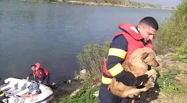 Câine salvat de pompieri din Canalul Dunăre Marea Neagră - 1maicainesalvat-1588323934.jpg