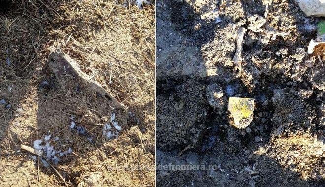 VIDEO / PERCHEZIȚII. Deșeurile ovinelor moarte în Portul Midia nu au fost incinerate, ci îngropate! - 21iananimalenavarasturnata1-1611217964.jpg