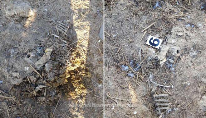 VIDEO / PERCHEZIȚII. Deșeurile ovinelor moarte în Portul Midia nu au fost incinerate, ci îngropate! - 21iananimalenavarasturnata2jpeg-1611217985.jpg