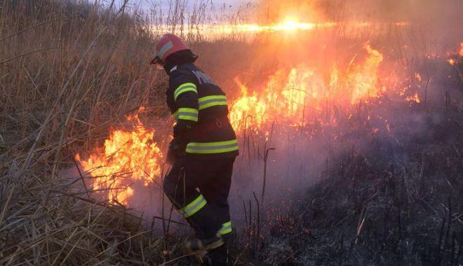 Foto: INCENDIU DEVASTATOR! Peste 20 de hectare de stuf, DISTRUSE DE FOC!
