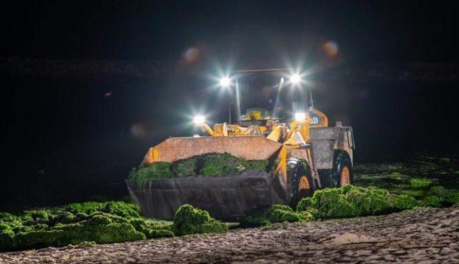 Foto: Două utilaje de la Mureș și Crișuri, aduse pentru a aduna algele de pe plajă. 24 de camioane acționează, noapte de noapte
