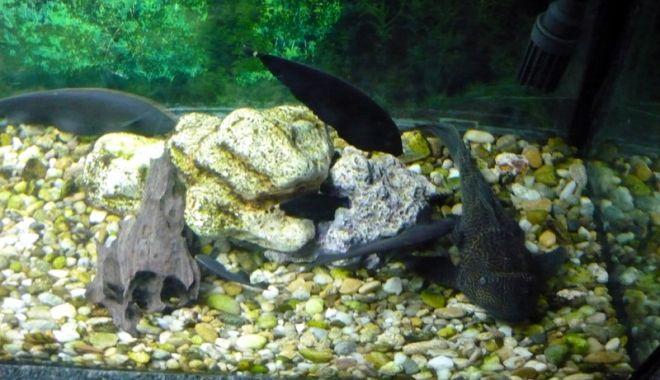 O adevărată încântare: Acvariul Constanța - acvariu-1531932194.jpg