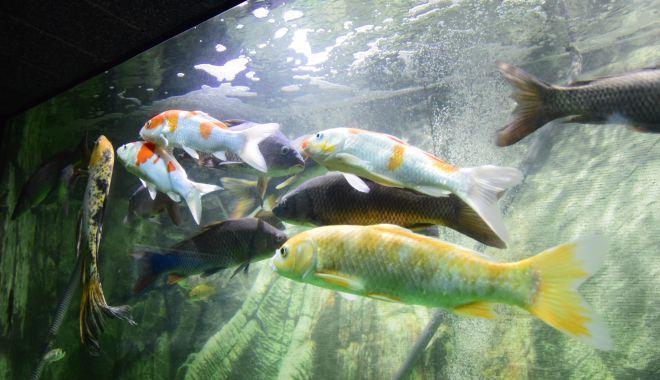 O adevărată încântare: Acvariul Constanța - acvariu103-1533642713.jpg