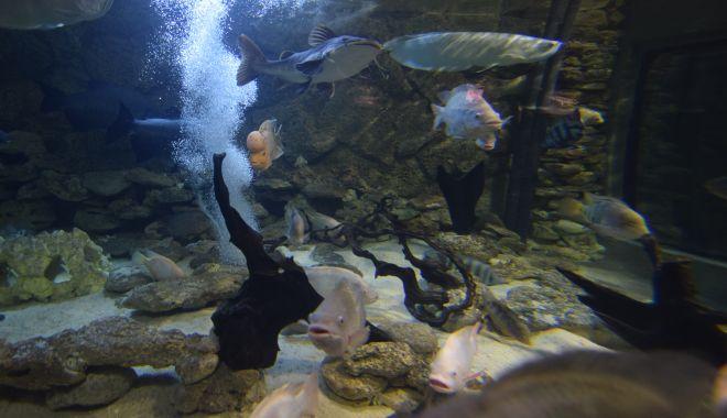 O adevărată încântare: Acvariul Constanța - acvariu120-1533642801.jpg