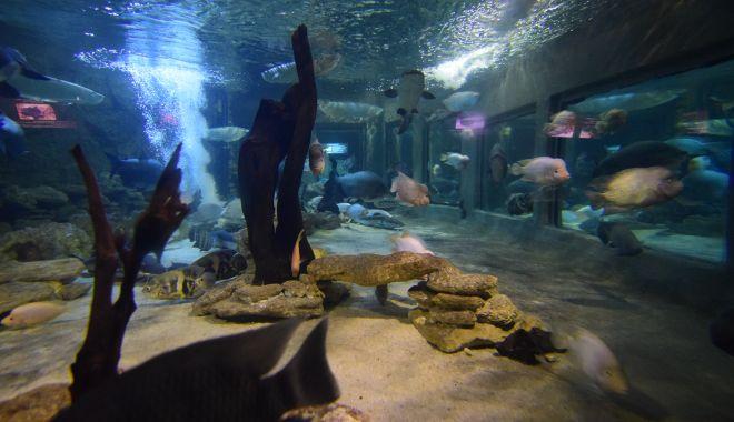 O adevărată încântare: Acvariul Constanța - acvariu19-1533642521.jpg