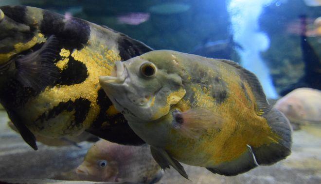 O adevărată încântare: Acvariul Constanța - acvariu35-1533642538.jpg