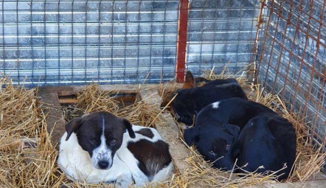 Foto: Primăria Constanța face pregătirile de iarnă la adăpostul pentru câini