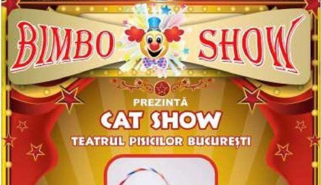 """Foto: """"Cat Show"""", la Centrul Multifuncțional Educativ pentru Tineret """"Jean Constantin"""""""
