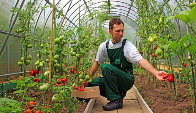 Foto: 9 miliarde de euro, bani europeni, în conturile fermierilor români