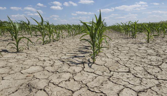 Foto: Agricultura la mila cerului! An greu pentru fermierii din Dobrogea