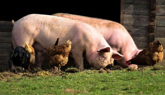 A început plata pentru bunăstarea animalelor - ainceputplata-1618471553.jpg