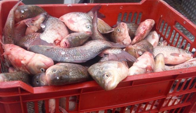 Produse alimentare confiscate și retrase de pe piață - alimenteretrase2-1494258008.jpg