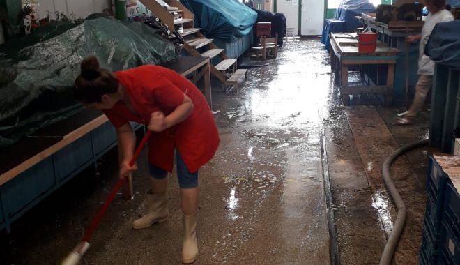 Foto: Ample acțiuni de igienizare în piețele agroalimentare din Constanța