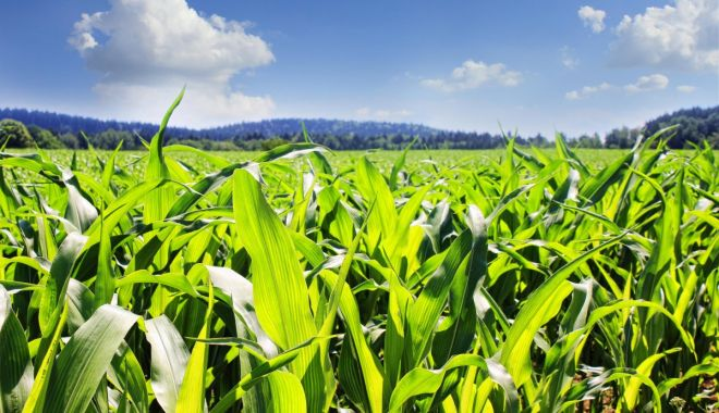 Asociaţia Producătorilor Agricoli Dobrogeni a semnat o colaborare cu Asociaţia Producătorilor de Porumb din România - asociatiaproducatorilor-1616763999.jpg