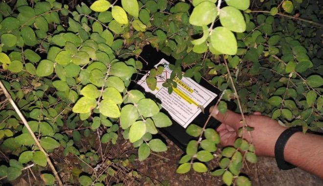 Atenție, constănțeni! Au fost amplasate momeli împotriva rozătoarelor - atentieconstanteni-1595327597.jpg