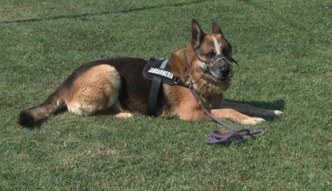 Foto: Guvernul SUA va dona Jandarmeriei Române patru câini specializați în detectarea explozibililor