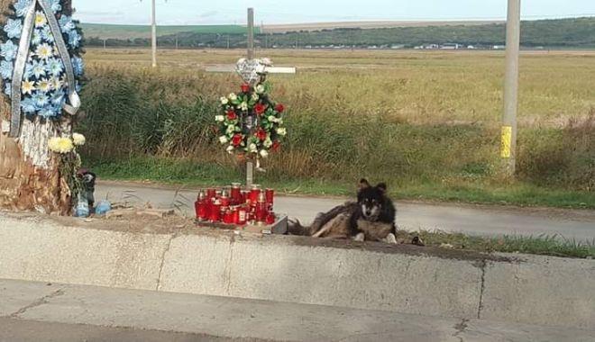 Foto: IMAGINI cu impact emoțional! Un câine păzește non-stop locul unde a murit stăpânul său, student