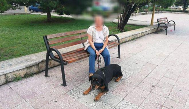 Foto: Amenzi pentru stăpânii câinilor plimbați fără botniță