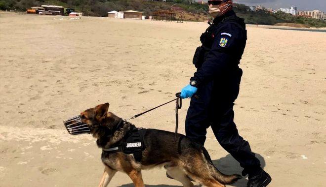 Câine-jandarm, proaspăt pensionar, dat spre adopție - cainejandarm1-1614886387.jpg