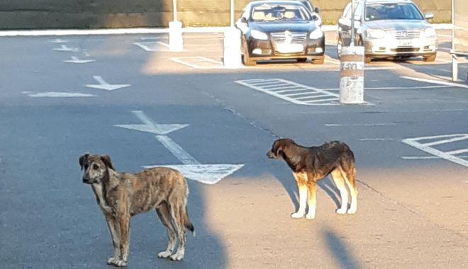 """Foto: Câinii fără stăpân, clienți fideli ai supermarketurilor. """"Până când vom avea străzile pline de potăi?"""""""