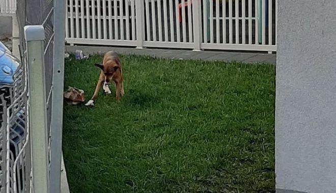 """Foto: Câinii maidanezi au început să frecventeze locurile de joacă. """"Nici aici nu scăpăm de ei!"""""""