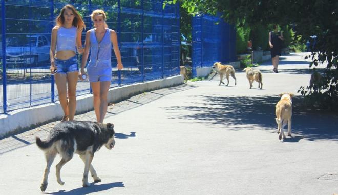 Foto: Invazia maidanezilor la Constanța. Câinii fără stăpân terorizează cartiere întregi