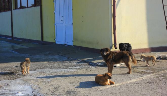 Foto: Câinii comunitari au reapărut prin cartiere.  Primarul Constanței promite un nou adăpost modern