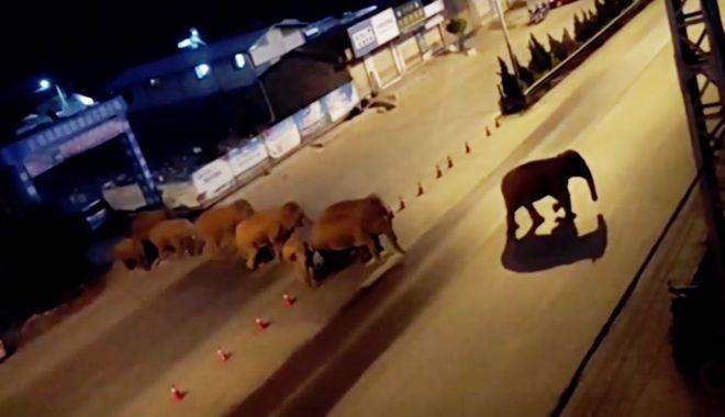 Călătoria celor 15 elefanţi urmărită pe tot globul are în spate o poveste tristă - calatoria5-1623320392.jpg