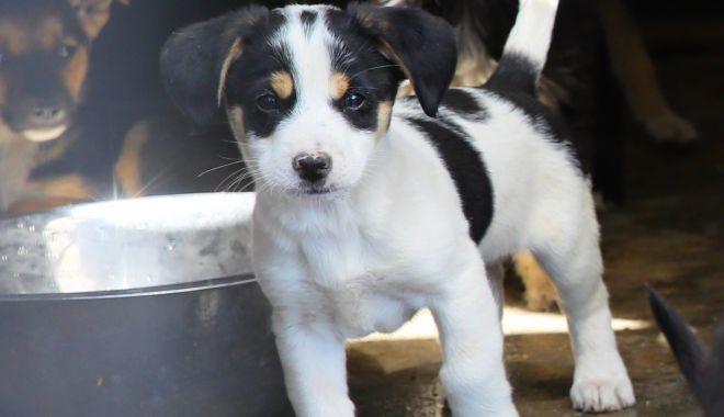 Tu poți fi șansa lui la viață! Campanie de adopţie a câinilor - campaniecaini-1602870874.jpg