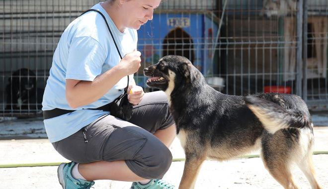Foto: Campanie de sterilizare gratuită a câinilor de rasă comună din Agigea