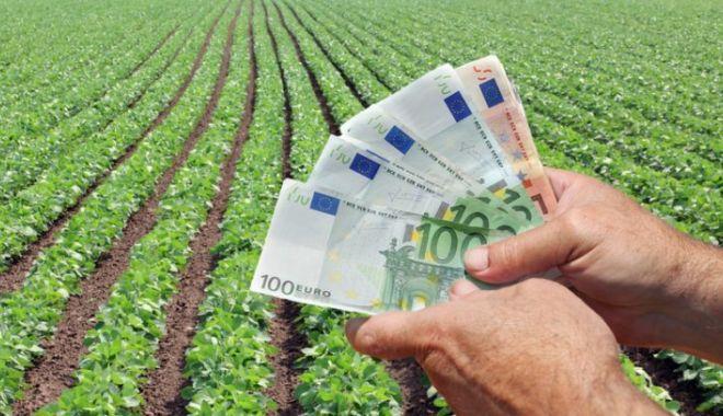 Foto: Câți bani vor primi fermierii din sectoarele vegetal și zootehnic