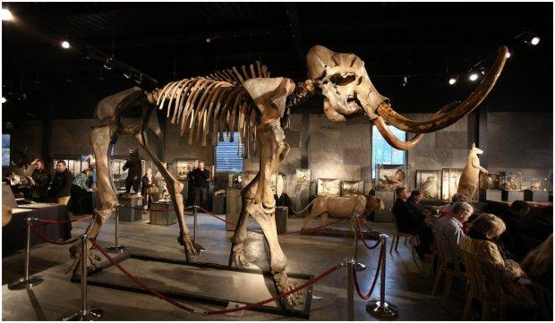 Cercetătorii vor să readucă la viață mamutul lânos dispărut acum 4.000 de ani - cercetatoriivorsareaducalaviatam-1631611515.jpg