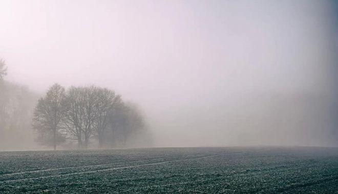 COD GALBEN de ceaţă, la Constanţa - codgalben-1603788350.jpg