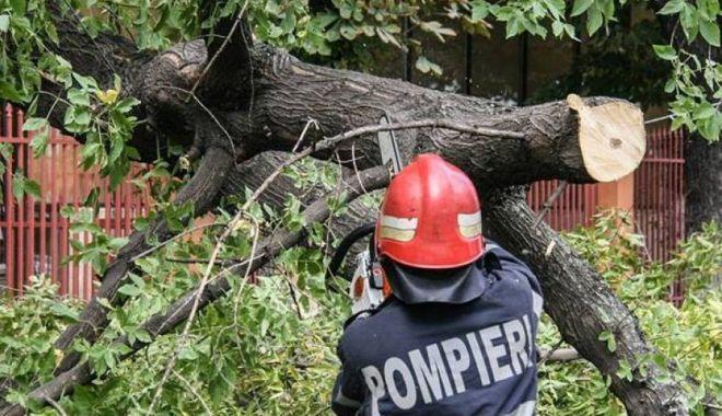 Foto: Copac căzut pe o mașină, în Constanța. Intervin pompierii