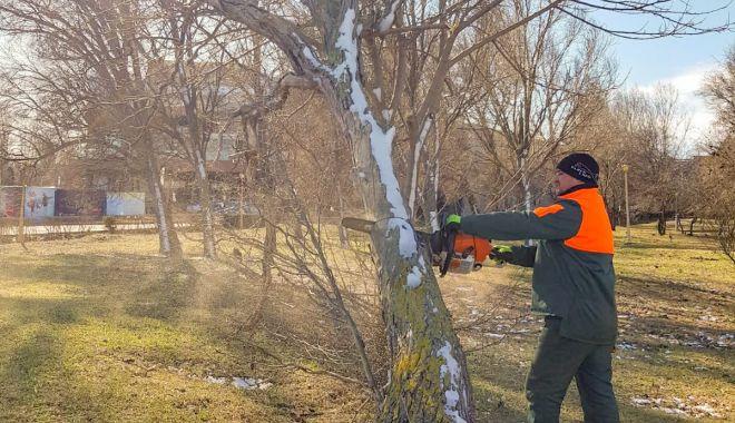 Copaci rupți de vânt? Puteți semnala problemele la administrația locală - copaciirupti-1581371216.jpg