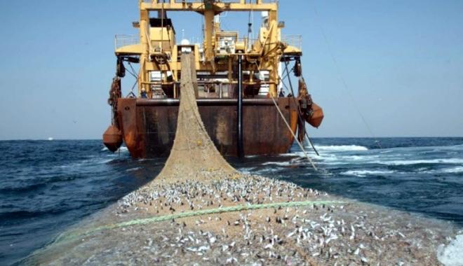 Cote de șprot și calcan în pescuitul de la Marea Neagră - cotedesprotsicalcan-1515331558.jpg