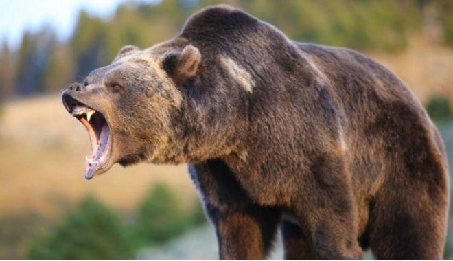 Foto: Turiști atacați de urs, pe munte! A fost nevoie de intervenția SMURD