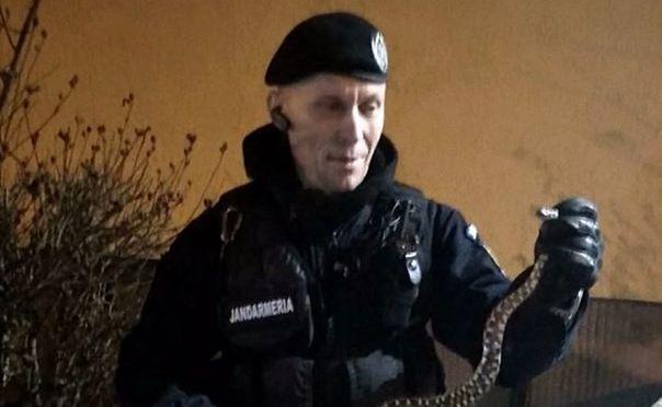 Foto: ALERTĂ într-un bloc din Constanța: UN ȘARPE a speriat locatarii!