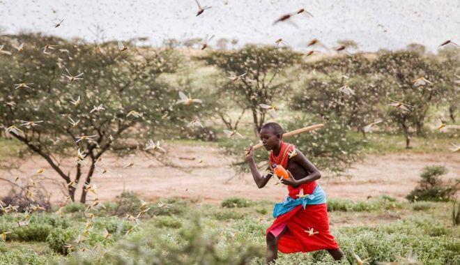 Foto: DEZASTRU ÎN CORNUL AFRICII! Fermierii recurg la măsuri disperate împotriva lor!