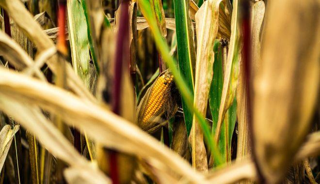 Declararea stării de calamitate pune în pericol producţia următorilor ani agricoli - declararestaredecalamitatesursac-1600883123.jpg